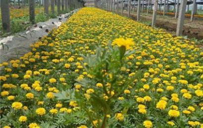 用时令草花打造植物墙的优势