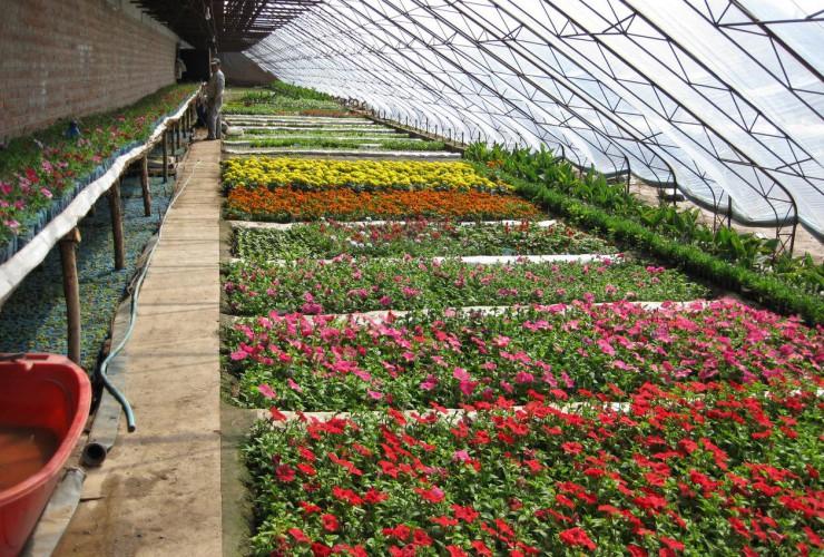 花卉温室大棚